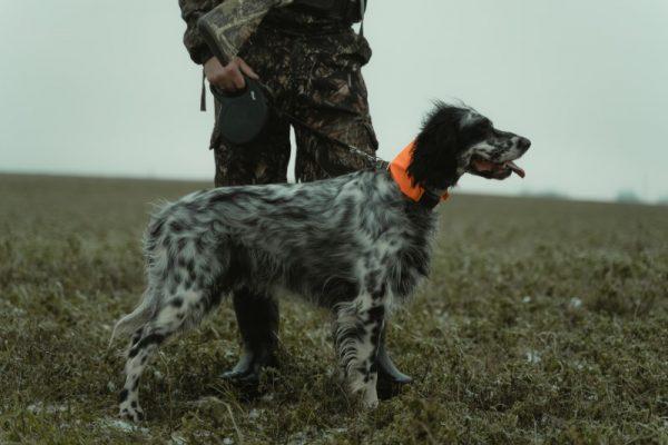 Hunting pants for comfortable hunting